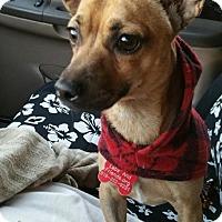 Adopt A Pet :: Mex - Burbank, CA