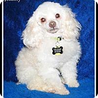 Adopt A Pet :: Waldwick NJ - Johnny - New Jersey, NJ