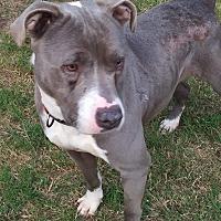 Adopt A Pet :: Ellie - Pierce, NE