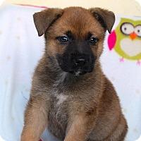 Adopt A Pet :: Quigley - Los Angeles, CA