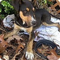 Adopt A Pet :: Elmer - Manchester, CT
