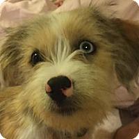 Adopt A Pet :: Baxter - Lexington, KY