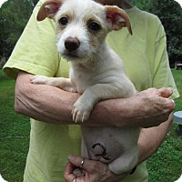Adopt A Pet :: SUNSHINE - Lincolndale, NY