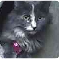 Adopt A Pet :: Brooke Patrick - Lombard, IL