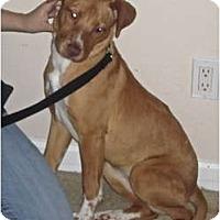 Adopt A Pet :: Jane URGENT! FOSTER NEEDED!!! - San Diego, CA