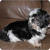 Adopt A Pet :: Phoebe - Grove City, OH