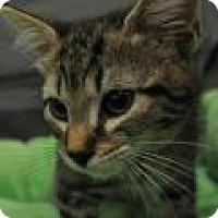 Adopt A Pet :: Matt - Port Republic, MD