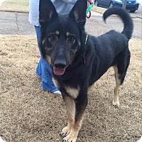 German Shepherd Dog Mix Dog for adoption in Greeneville, Tennessee - Nikon