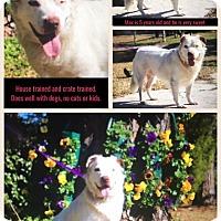 Adopt A Pet :: Max - Atlantic, NC