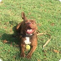 Adopt A Pet :: T'vina - Harrisville, WV