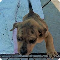 Adopt A Pet :: Ramsey - Jacksonville, TX
