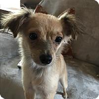 Adopt A Pet :: Jimbob - Tumwater, WA