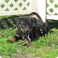 Adopt A Pet :: DESI - Bedminster, NJ
