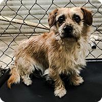 Adopt A Pet :: O'BRIAN - Chico, CA