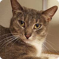Adopt A Pet :: Benson - Grayslake, IL