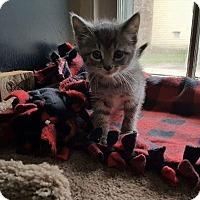 Adopt A Pet :: Two Paws (Adoption Pending) - Salamanca, NY