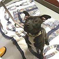 Adopt A Pet :: Jett - Berlin, CT