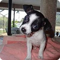 Adopt A Pet :: Bentley (FL) - Gilford, NH