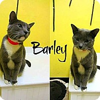 Adopt A Pet :: Barley - Mobile, AL