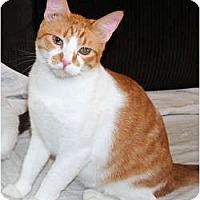 Adopt A Pet :: Diamond - Palmdale, CA