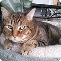 Adopt A Pet :: Bismark - Anchorage, AK