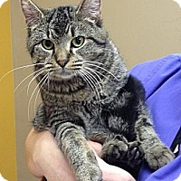 Adopt A Pet :: Ethel - Troy, OH