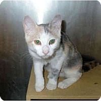 Adopt A Pet :: Sugar - Colmar, PA