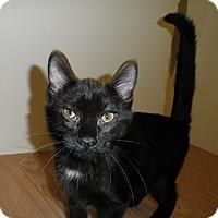 Adopt A Pet :: Snugglebunny - Milwaukee, WI