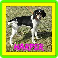 Adopt A Pet :: Harper - Toledo, OH