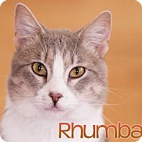 Adopt A Pet :: Rhumba - Chicago, IL