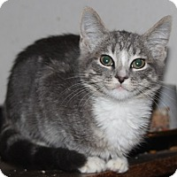 Adopt A Pet :: SilverStar - North Highlands, CA