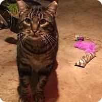 Adopt A Pet :: Scottie - Eugene, OR
