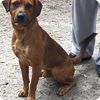 Adopt A Pet :: Edgar - Orlando, FL
