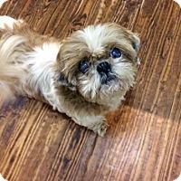 Adopt A Pet :: Walden - McKinney, TX