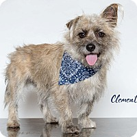 Adopt A Pet :: Clement - Houston, TX
