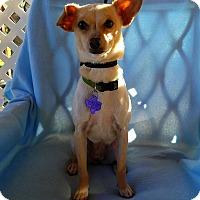 Adopt A Pet :: Jello - New Stanton, PA