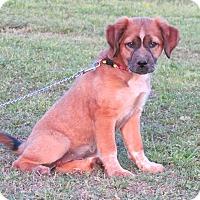 Adopt A Pet :: TAHLIE - Bedminster, NJ