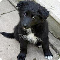 Adopt A Pet :: Pantera & Nomi - El Cajon, CA