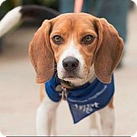 Adopt A Pet :: Franko Henry - Saskatoon, SK