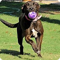 Adopt A Pet :: PRINCESS BAILEY - Phoenix, AZ