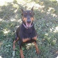 Adopt A Pet :: Asia--pending - New Richmond, OH