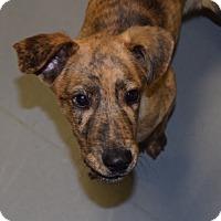 Adopt A Pet :: *Wally - PENDING - Westport, CT