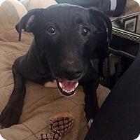 Adopt A Pet :: Maddie-Adopted! - Detroit, MI