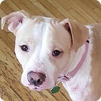 Adopt A Pet :: Taylor - Tonawanda, NY