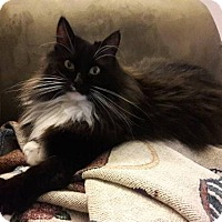 Adopt A Pet :: Mary Kay Female - knoxville, TN