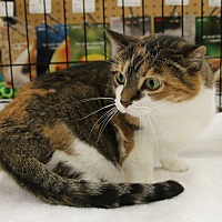 Adopt A Pet :: Cloe - Rochester, MN