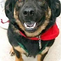 Adopt A Pet :: Bayley - Fairfax Station, VA