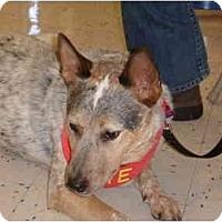 Adopt A Pet :: Leopold - Phoenix, AZ