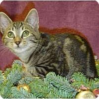 Adopt A Pet :: Tortuga - Modesto, CA