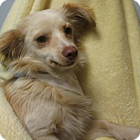 Adopt A Pet :: Omar - Foster, RI